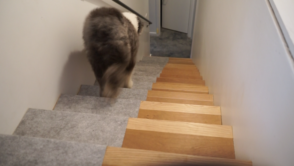 ALLProtect Pets on Stairs